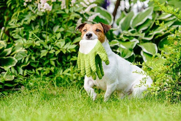 Zahradní rukavice, důležitý pomocník