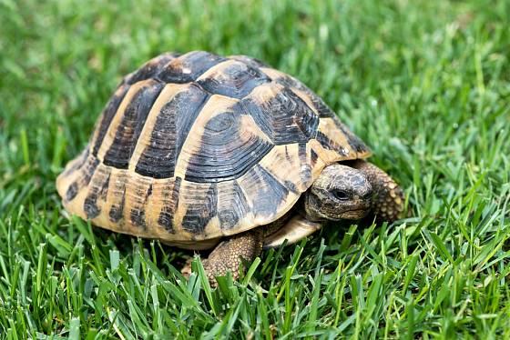 Želvičky se rády proběhnou na slunci