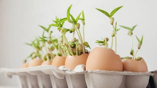 Vaječné skořápky poskytnou prostor pro rostliny