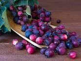 Plody muchovníku