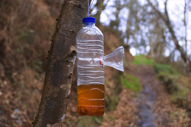 Past na vosy zhotovíme z PET lahve