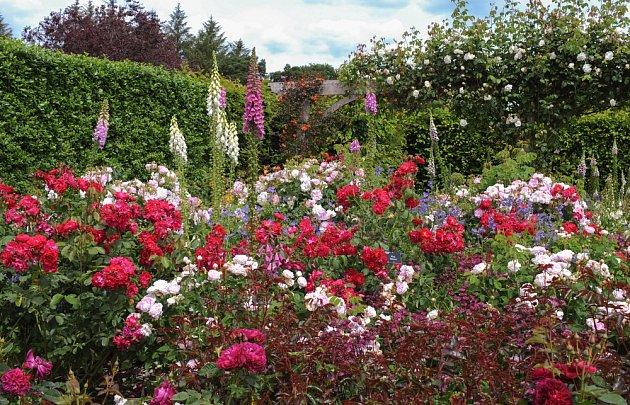 Pestře kvetoucí růže a náprstníky.