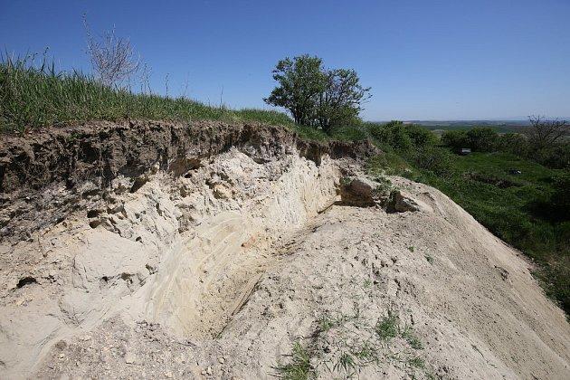 Písková stěna je připravena pro hnízdění vlh pestrých, které už se vracejí ze zimovišť. Foto: Ivo Stejskal