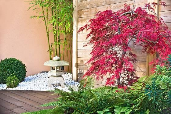 Inspirováno zenovými zahradami: bambus, javor, kapradiny.
