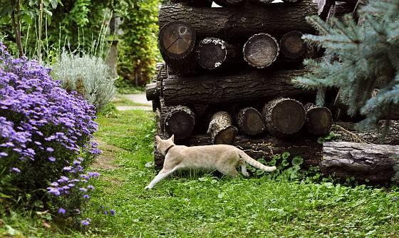 Drobní živočichové přivítají vhodná zimoviště, třeba i v podobě hromady dřeva.