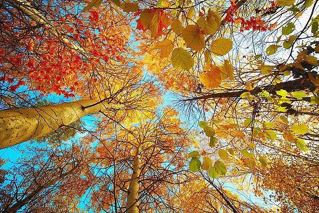 podzimní barvy listů a lístků