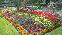 S letničkami bude zahrada každý rok jiná