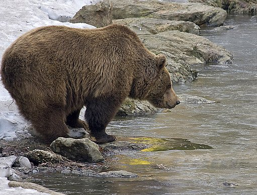 medvěd většinu zimy prospí