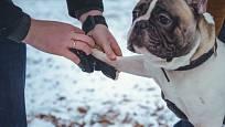 Pokud si pes zvykne na speciální bačkůrky, navlékněte mu je před procházkou.