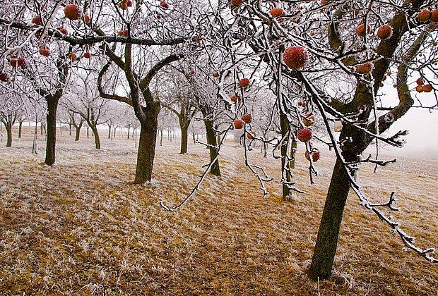 První mrazy ještě půdou neproniknou do hloubky