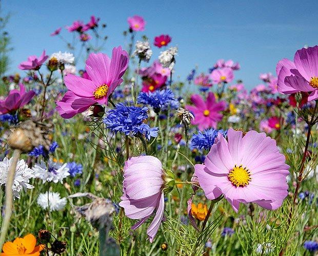 Do přírodní zahrady patří květinová louka, třeba s krásenkami