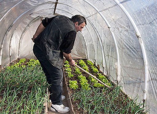 foliovník pomáhá k urychlování růstu zeleniny