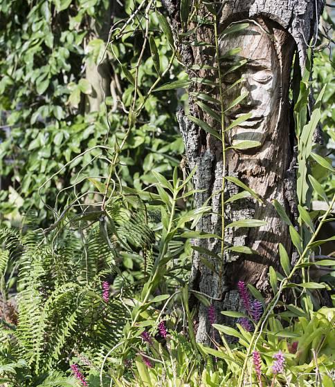 Uschlý strom může znovu ožít jako umělecké dílo zdobící zahradu