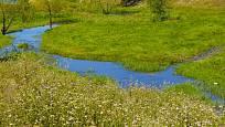 Potůček volně meandrující loukou - prevence sucha i povodní