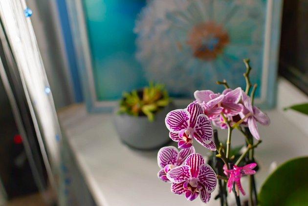 Orchideje jsou díky svým neobvyklým květům všemožných barev oblíbenou pokojovou rostlinou