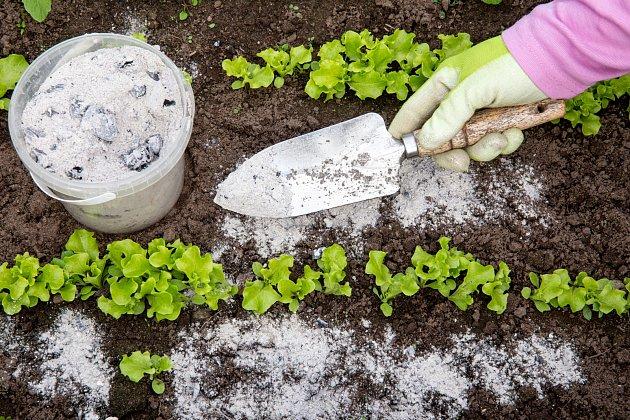 Samotný popel není vhodný vyloženě na rostliny, které milují kyselé prostředí.