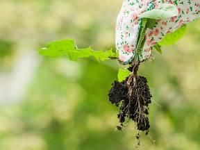 Ulehčete si práci s pletím plevele mezi dlaždicemi.