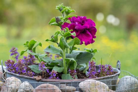 Gabionové květináče mohou mít různé tvary od válcových přes kvádrové až po krychlové.