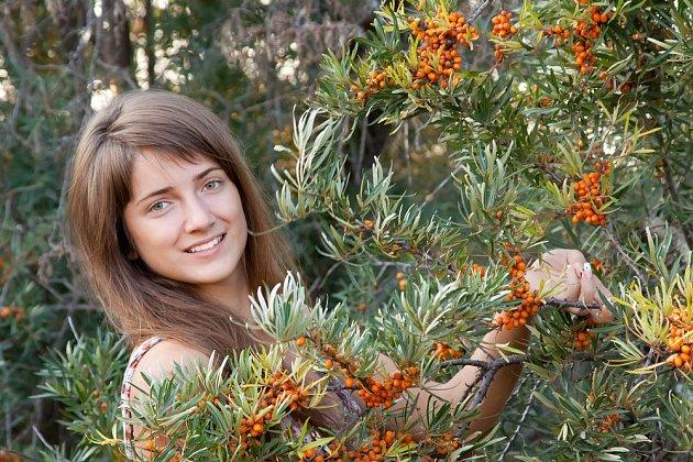 Plody rakytníku dozrávají na konci léta i na podzim, dle odrůdy