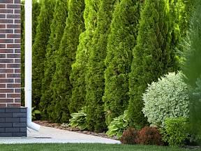 Větrolam na zahradě by měl být polopropustný.