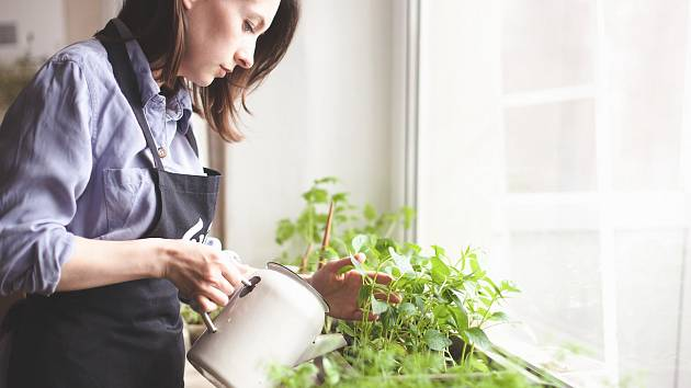 Vypěstujte z bylin ze supermarketu zdravím překypující rostliny.