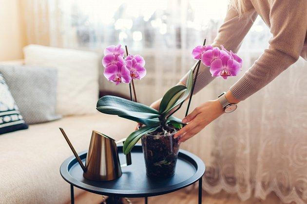 Orchidejím se bude líbit, když do zálivky přidáme kávovou sedlinu