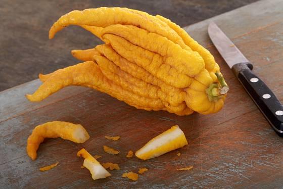Citrus medica cv. 'Digitata' (buddhova ruka) - velké plody, hrubá kůra, bizarní tvary.