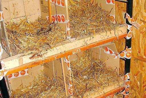 Hnízda ze staré police a lepenkových krabic, vystlaná slámou.