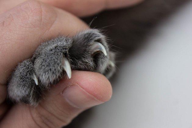 Kočičí drápy mohou způsobit pořádné škrábance.