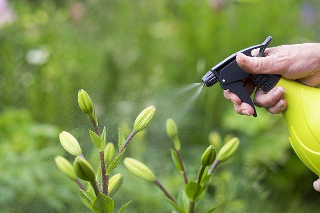 Česnek i cibule fungují nejen jako přírodní odpuzovač a v podobě postřiku způsobují škůdcům a hmyzu nepříjemný pocit pálení.