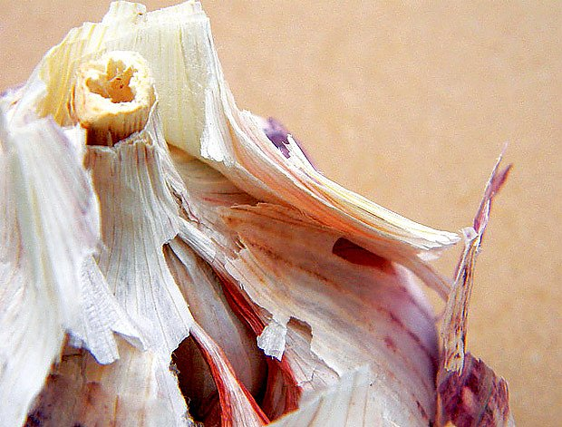 Španělské česneky mívají dutý stonek a hodně slupek