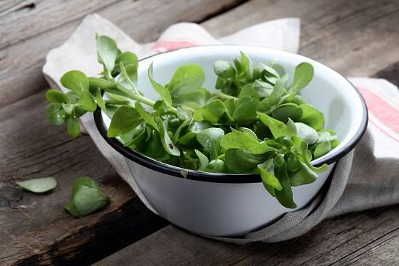 Čerstvá šrucha zelná, chutná a zdravá, je výtečná do salátů