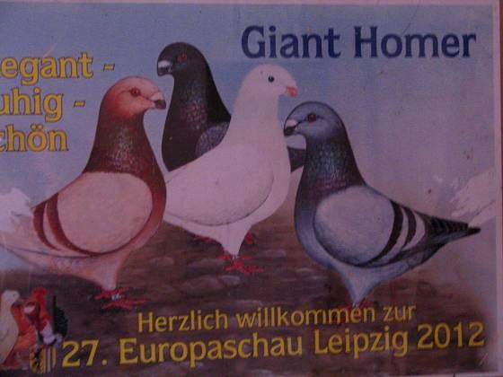 Americké plemeno holubů Giant Homer, po našem Gigant, má dlouhou historii
