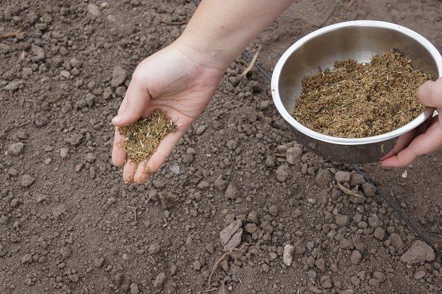 Směs vyséváme rovnoměrně – stačí 2 g osiva na 1 m2