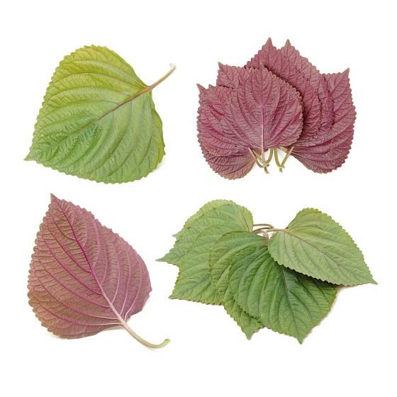 Perilla, někdy vietnamská bazalka, se přidává až na závěr.