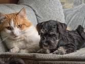 Vždy je lepší, pokud ke kočce v domácnosti přibyde jako další mazlíček pes, než naopak.