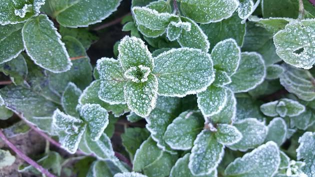 Mnohé bylinky podzim i zimu na zahradě vydrží.
