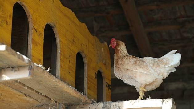9a40ea59c09 Jak postavit a vybavit útulný kurník pro slepice  - Hospodářská zvířata