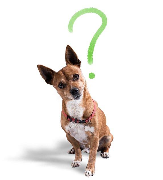Co dostal do vínku váš pes?