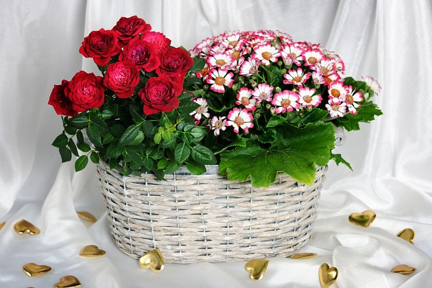Do prostornějších košíků můžeme vložit dvě i více rostlin, a to i s květináči.