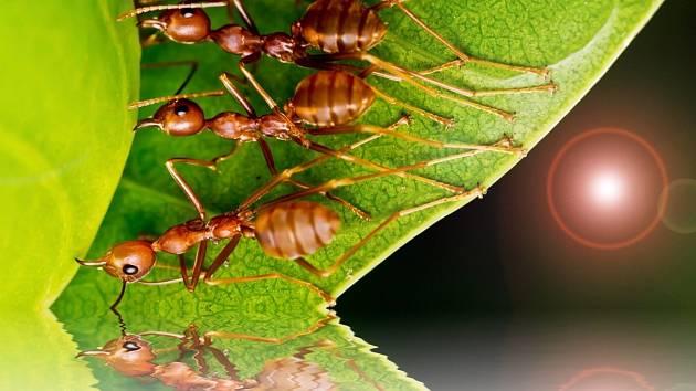 Levný a účinný trik na mravence