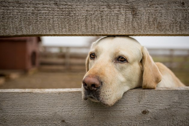 Psi tuší, cítí nebo vědí o mnoha věcech, které nám lidem zůstávají skryté.