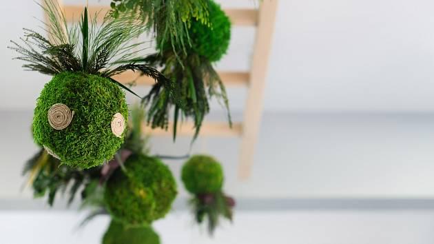 Kokedama je speciální způsob pro pěstování rostlin, který se vyvinul z pěstování bonsají.
