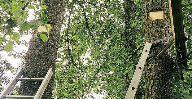 stromořadí na kterém vyrostl domek ve větvích