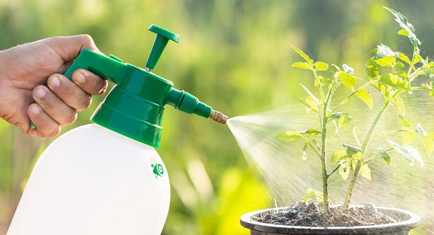 Aby se předešlo plísňovým chorobám, roztok aplikujte každých 7-14 dní.