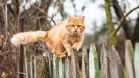 Při výběru plotu bychom měli zohlednit všechny obyvatele.