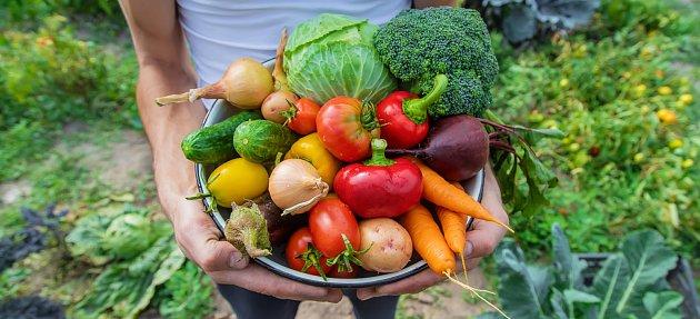 Hnojte rybou, dodáte vašim pěstovaným rostlinám tři důležité prvky, a to fosfor, draslík a vápník.