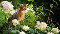 Kočky můžeme buďto zahnat, nebo přilákat pomocí specifických druhů rostlin