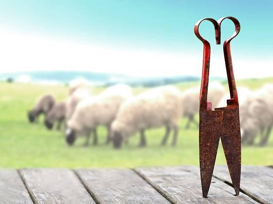 Jednoruční nůžky na stříhání ovcí.