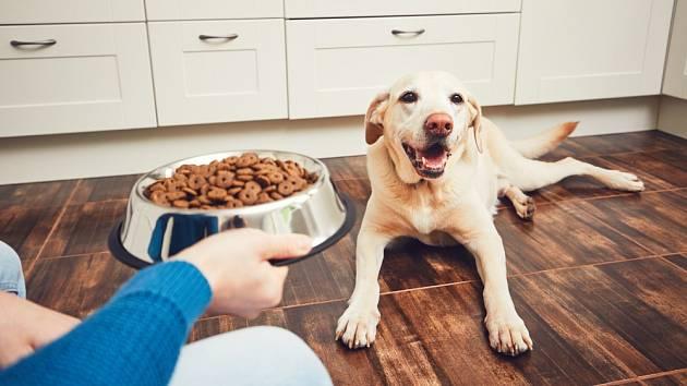 Důvodů, proč pes odmítá stravu, může být celá řada.